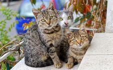 Free Photo Of Three Cats Royalty Free Stock Image - 109915366