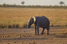 Free Close-up Photo Of Baby Elephant Royalty Free Stock Photos - 109915488
