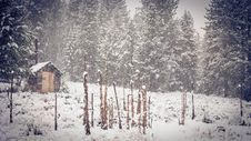 Free Brown Shed Near Green Pine Trees During Snow Royalty Free Stock Images - 109915519