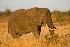 Free Close-up Photo Of Elephant Stock Photography - 109915592