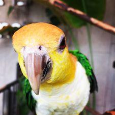 Free Close-up Photo Of A Parakeet Bird Royalty Free Stock Photo - 109915595