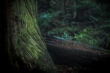 Free Green And Black Tree Trunk Stock Photos - 109915813