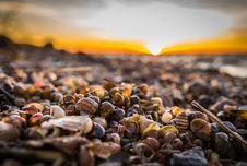 Free Selective Focus Photography Of Snail Shells Royalty Free Stock Photography - 109915977