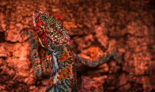 Free Close-up Photo Multicolored Lizard Royalty Free Stock Photos - 109915988