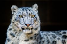 Free Close-Up Photography Of Leopard Stock Photo - 109916010
