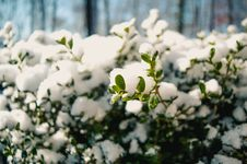 Free Photography Of Snow On Plants Stock Photography - 109916132