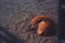 Free Short-coated Dog Sleeping On Soil Ground At Daytime Royalty Free Stock Photography - 109916137