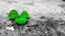 Free Green Leaf On Grey Ground Royalty Free Stock Photo - 109916145