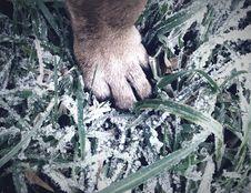 Free Paw On Green Grass Stock Photo - 109916160