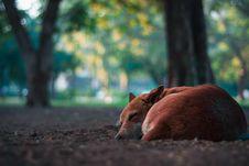 Free Closeup Photo Of Short-coated Brown Dog Royalty Free Stock Photo - 109916165