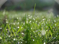 Free Shallow Focus Of Raindrops On Green Grass Stock Photos - 109916213