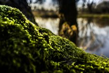 Free Shallow Focus Of Green Moss Royalty Free Stock Image - 109916256