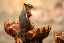 Free Macro Shot Photography Of Gray And Brown Squirrel On Brown Wood Royalty Free Stock Images - 109916299