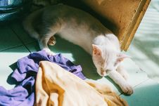 Free White Cat Near Door And Assorted Textiles Royalty Free Stock Image - 109916346