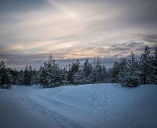 Free Green Pine Trees Forest Surrounded By Snow Pile Royalty Free Stock Images - 109916399