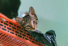 Free Brown Tabby Cat Lying On Plastic Rack Stock Photo - 109916400