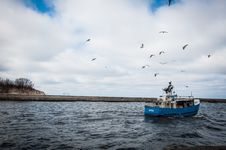 Free Blue And White Fishing Board Under Black Birds Stock Image - 109916471