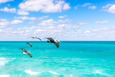 Free Four Brown Pelicans Flying At Daytime Stock Photo - 109916480