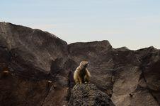 Free Brown Lemur On Rocky Mountain Stock Photos - 109916483
