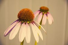 Free Selective Focus Photography Of White-and-purple Petaled Flower Royalty Free Stock Photography - 109916507