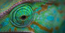 Free Green Animal Eye Royalty Free Stock Image - 109916636