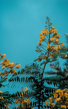 Free Closeup Photo Of Yellow Floral Plant Stock Image - 109916741