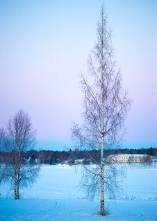 Free Trees Under Blue Sky Stock Photo - 109916760