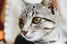Free Close-Up Photography Of Tabby Cat Stock Photography - 109916842