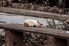 Free Photo Of A Cat Sleeping On Gray Concrete Bench Royalty Free Stock Images - 109916889