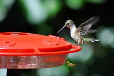 Free Humming, Bird, Free Stock Photos - 109917003