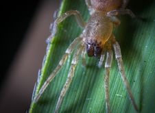 Free Close-up Photography Of Yellow Spider On Green Leaf Stock Photo - 109917010