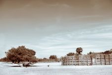 Free Sepia Photograph Of Trees And Hay Royalty Free Stock Photos - 109917018