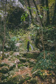 Free Woman Wearing Black Trench Coat In The Forest Stock Photo - 109917080