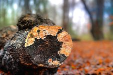 Free Selective Photography Of Wooden Log Royalty Free Stock Photos - 109917128