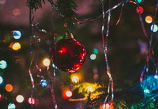 Free Photography Of Red String Lights Hanging On Green Trees Royalty Free Stock Photos - 109917228