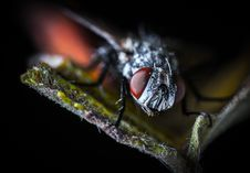 Free Close-up Photography Fly On Green Leaf Plant Royalty Free Stock Photo - 109917235