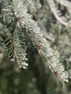 Free Icy Tree Stock Image - 109917281