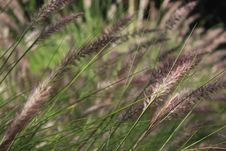 Free White And Black Grasses In Close-up Photography Stock Photos - 109917363