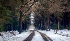 Free Photography Of Road During Winter Season Royalty Free Stock Photography - 109917407