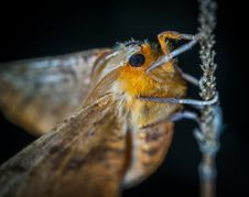 Free Close-Up Photography Of Brown And Orange Moth Royalty Free Stock Image - 109917416