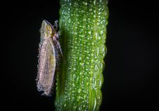 Free Macro Photography Of Froghopper On Leaf Stock Photo - 109917460