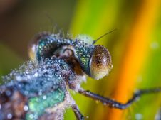 Free Tilt Shift Lens Photography Of Brown And Black Insect Royalty Free Stock Images - 109917469