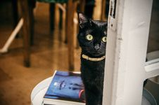 Free Close-Up Photography Of Black Cat Stock Images - 109917684