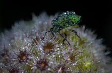 Free Green Bug On Flower Macro Photography Stock Photo - 109917840