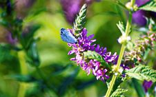 Free Purple Petaled Flower With Blue Butterfly Stock Photo - 109917880