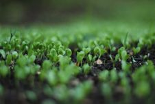 Free Green Leafed Plant Bokeh Photography Stock Image - 109918041