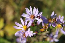 Free Purple Flower Macro Shot Shallow Focus Stock Photos - 109918353