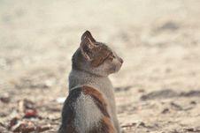 Free Short-coated Black Orange White Cat Royalty Free Stock Photography - 109918377
