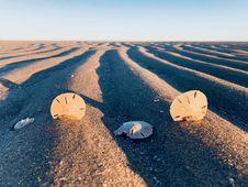 Free Three Sand Dollars On Sand Stock Photos - 109918493
