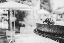 Free Grayscale Photo Of Bird On Water Fountain Stock Photos - 109918603